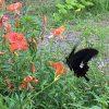 夏の花 otomo vie cent